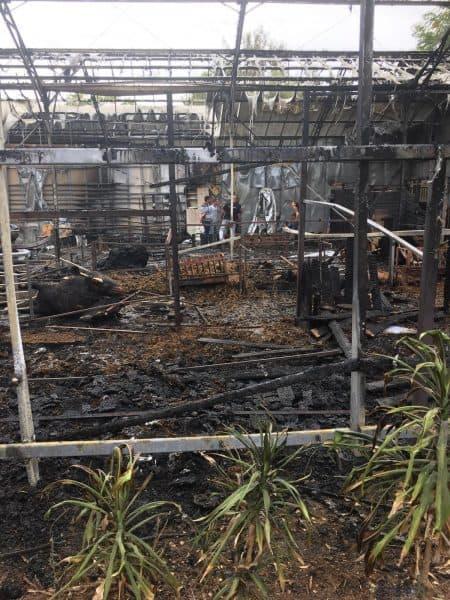 שריפה חוות סוסים בסביון